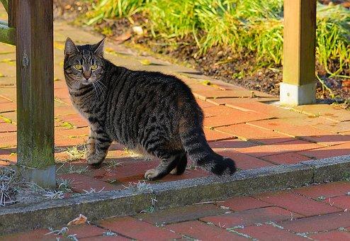 Cat, Animal, Cute, Mammal, Portrait, Noble