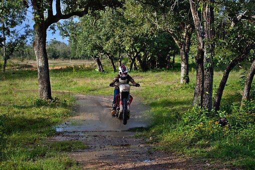 Wheeler, Rider, Trail, Riding, Tree, Road, Nature