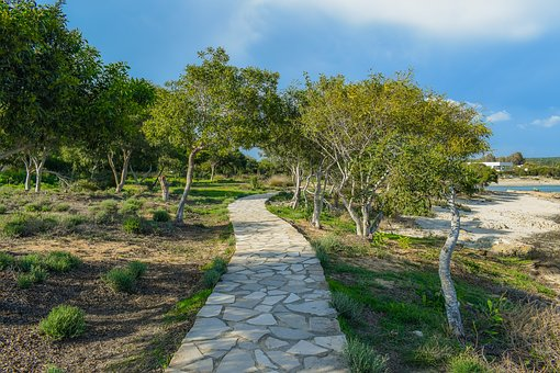 Path, Coppice, Copse, Forest, Trees, Glade, Sea, Nature