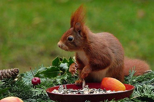 Animal, Rodent, Mammal, Squirrel