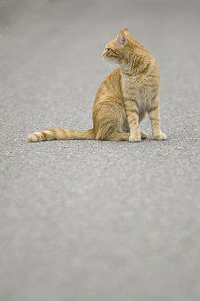 Cat, Tomcat, Pet, Redheaded, Sitting, Tabby, Road
