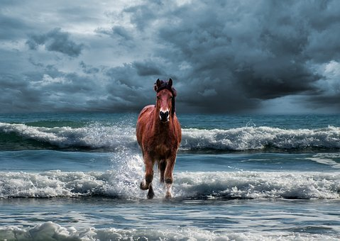 Mati, Mare, The Horse, The Head Of A Horse, The Mane