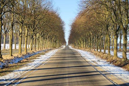 Tree, Nature, Road, Wood, Season, Park, Path, Away