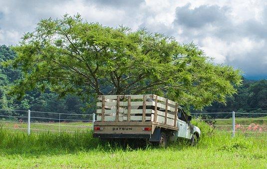 Truck, Tree, Landscape, Colima, Broken Truck, Clouds