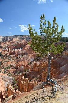 Tree, Bryce Canyon, Bryce Canyon National Park