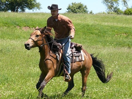 Rodeo, Cowboy, Rider, Horse, Country, Western, Farm