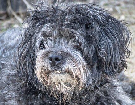 Dog, Abandoned, Stray Dog, Poodle, Buchón, Look, Canine