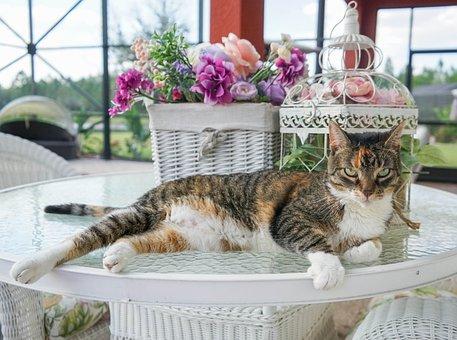 Cat, Calico, Feline, Animal, Cute, Kitty, Pet, Domestic