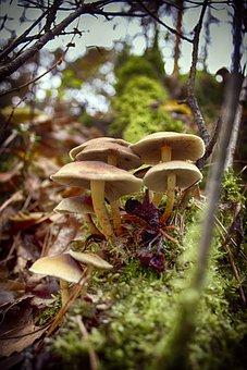 Paths Chairs, Wood Scavengers, Fungi, Eerbeek, Veluwe