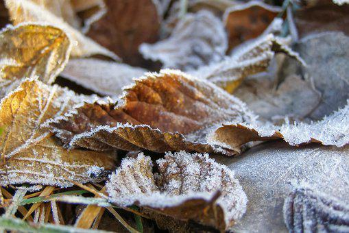 Foliage, Ground Frost, Frost, Dry Leaves, Bronze