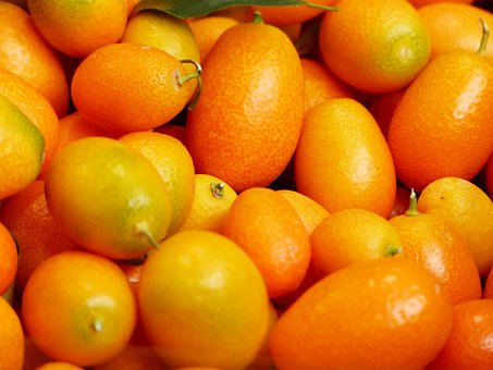 Kumquats, Fruits, Fruit, Fortunella, Dwarf Rind, Orange
