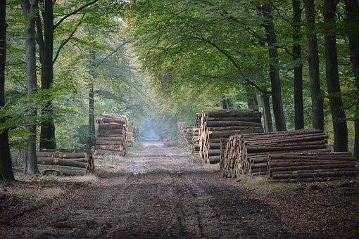Autumn, Forest, Nature, Trees, Avenue, Veluwe, Garderen