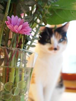 Cat, Flower, Cute, Pet, Animal, Green, Spring, Floral