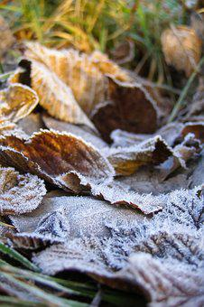 Foliage, Ground Frost, Frost, Hard Rime, Dry Leaves