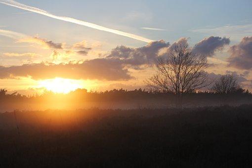 Heide, Veluwe, Forest, Trees, Dutch Landscape