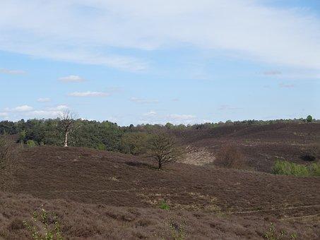 Nature, Heide, Veluwe, Veluwezoom, Dutch Landscape
