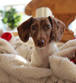 Dog, Puppy, Pet, Cute, Mammal, Animals, Delightful