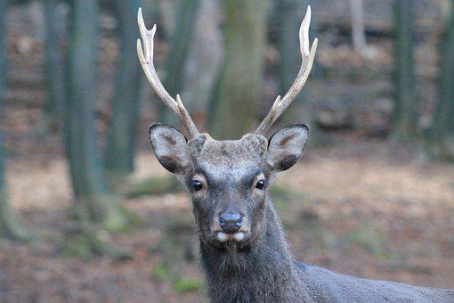 Hirsch, Animal World, Mammal, Nature, Animal, Antler