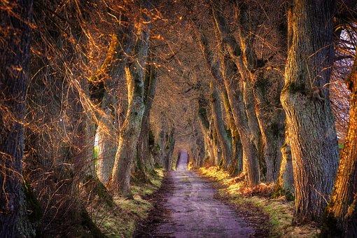 Nature, Tree, Wood, Landscape, Light, Avenue