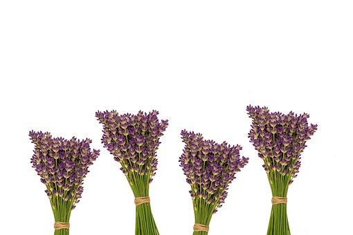 Flora, Flower, Nature, Blooming, Herb, Lavender Color