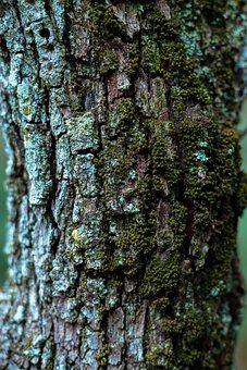 Bark, Tree, Wood, Trunk, Nature, Moss, Desktop