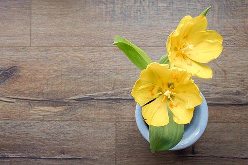 Flower, Background, Tulip, Yellow, Morning, Spring