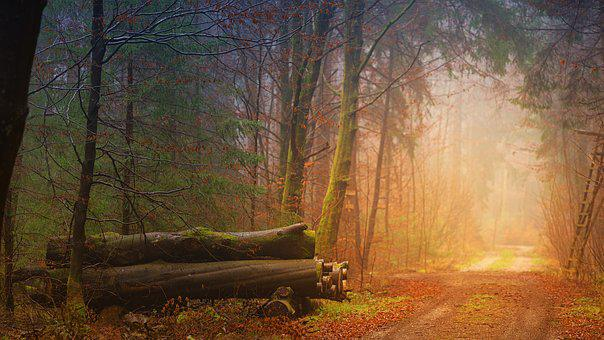Autumn, Fog, Forest, Tree Trunks, Away, Road, Route