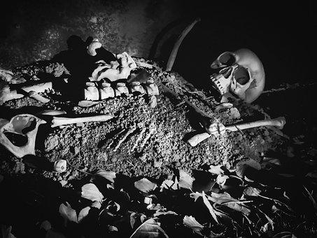 Halloween, Skeleton, Spooky, Scary, Skull, Holiday