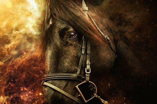 Horse, Horseback Riding, Animals, Horses, Head, Animal