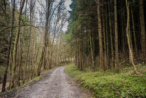 Wood, Nature, Tree, Landscape, Road, Leaf, Path, Park