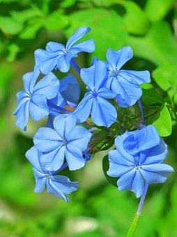 Nature, Plant, Flower, Summer, Leaf, Garden