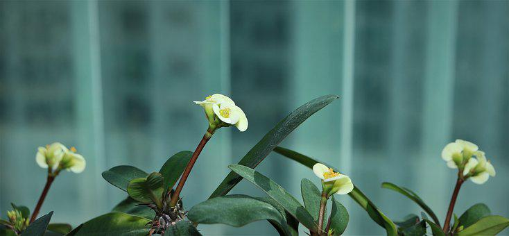 Flowers, Affix, White, Yellow, White Color, Leaf