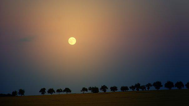 Moon, Night, Trees, Avenue, Sky, Moonrise, Evening