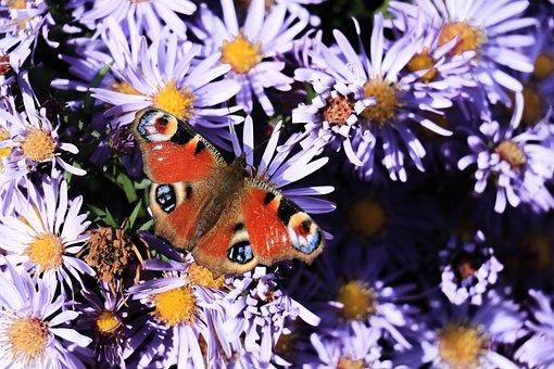Nature, Flower, Plant, Summer, Garden, Butterfly