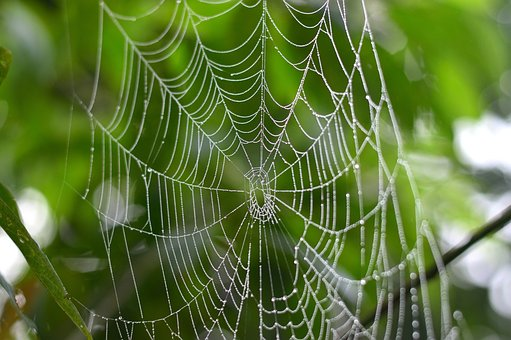 Spider, Web, Nature, Rocio, Tropical, Leaves, Tree