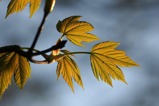 Leaf, Nature, Fall, Flora, Outdoors, Tree, Spring