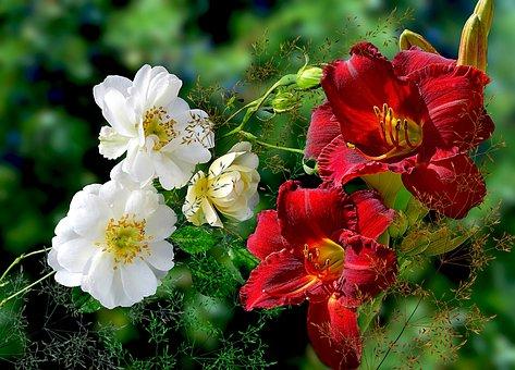 Nature, Flower, Plant, Garden, Floral, Flower Buds