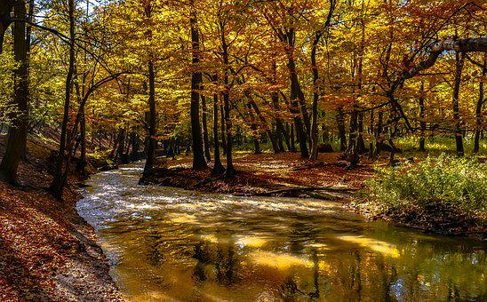 Nature, It's Raining, Wood, Landscape, River, Plant