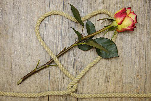 Rose, Heart, Love, Connection, Connected, Knot, Romance