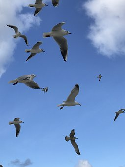 Bird, Animal World, Seagull, Flight