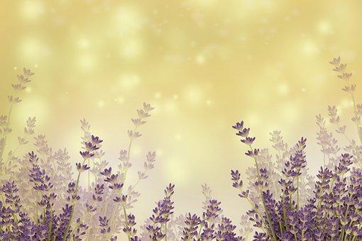 Nature, Season, Desktop, Flower, Summer, Flora, Color