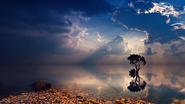 Sunset, Dawn, Sun, Sky, Tree, Sunbeam, Dusk, Ocean