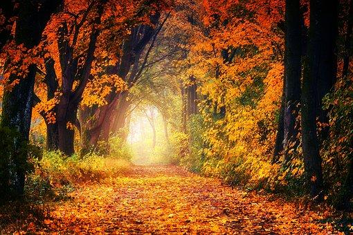 Autumn, Avenue, Away, Leaves, Tree, Leaf, Nature