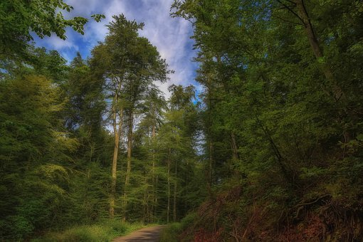 Forest, Nature, Tree, Wood, Landscape, Panorama