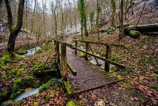 Wood, Nature, Tree, Path, Leaf, Autumn, Park, Landscape
