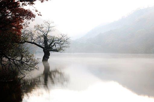 Fog, Nature, Scenery, Wood, Lake, Pond, Landscape