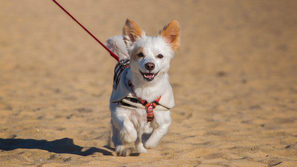 Dog, Animal, Cute, Pet, Mammal, Young, Little, Sand