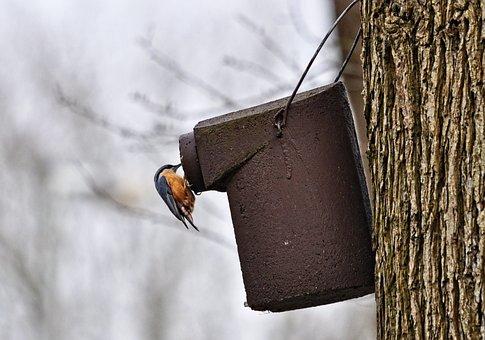 Robin, Bird, Animal, Wildlife, Nesting Box, Tree, Trunk
