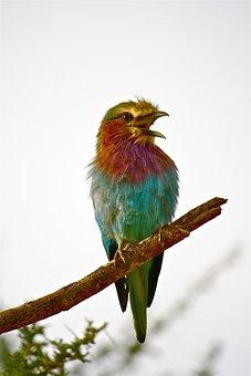 Aves, Animalia, Nature, Mountain, Italy, Coots