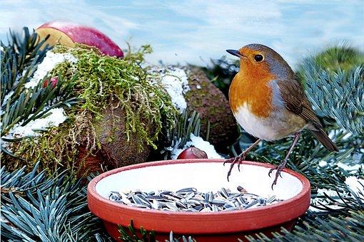 Animal, Bird, Songbird, Robin, Erithacus Rubecula